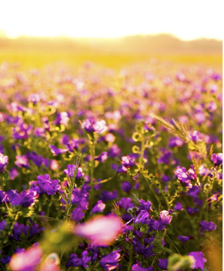 nyhedsbrev blomster